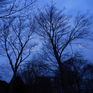 Photo 29-03-13 19 29 27 (300 x 300)